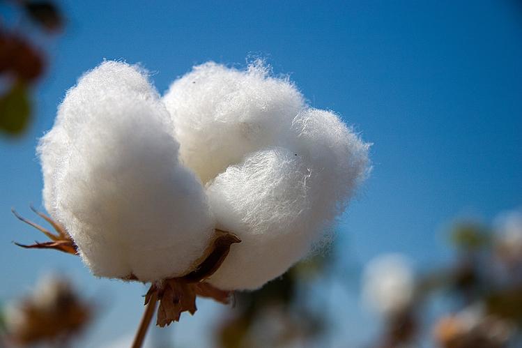Beneficios de las fibras naturales en los calcetines