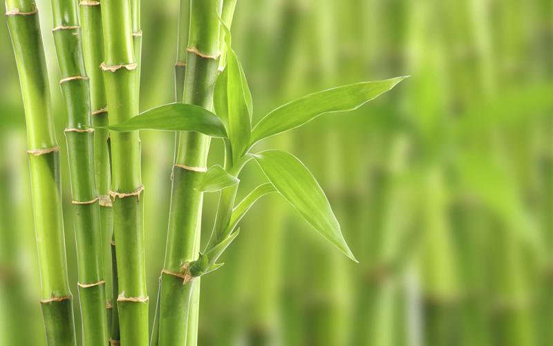 La fibra de bambú